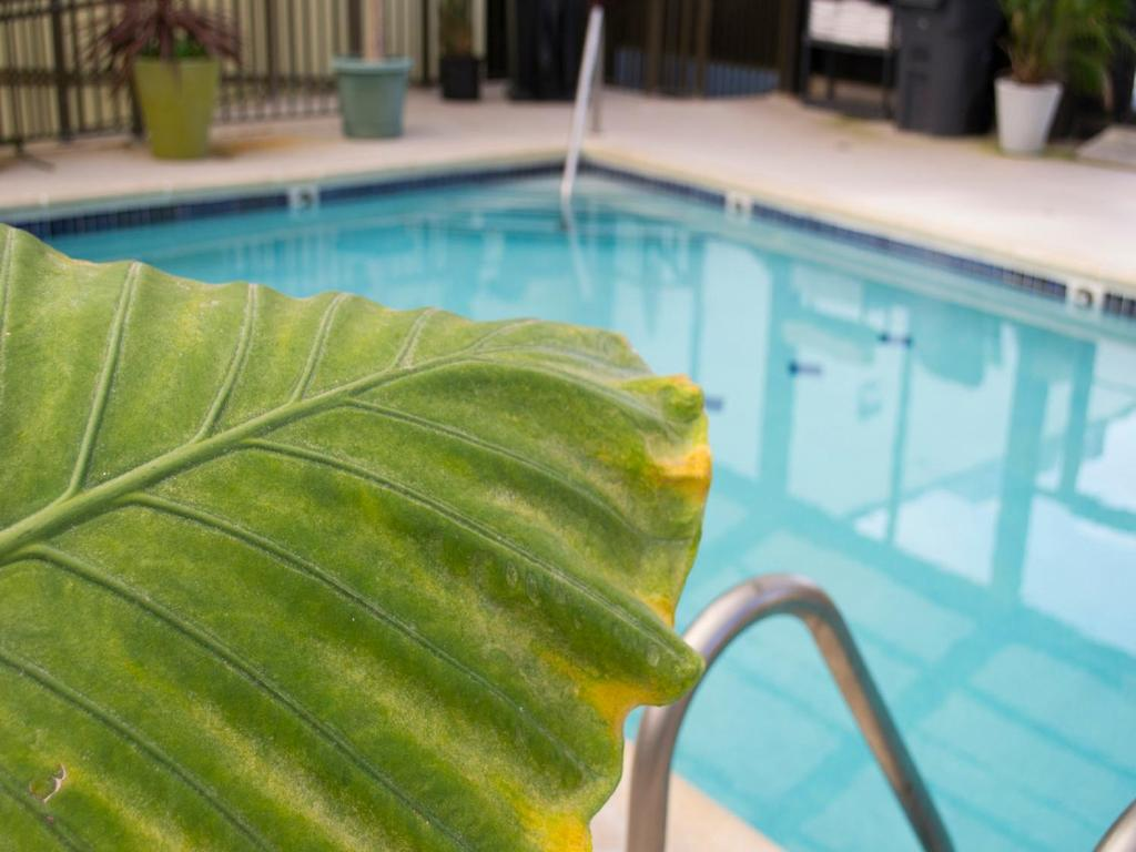 The swimming pool at or near Brighton Suites Hotel
