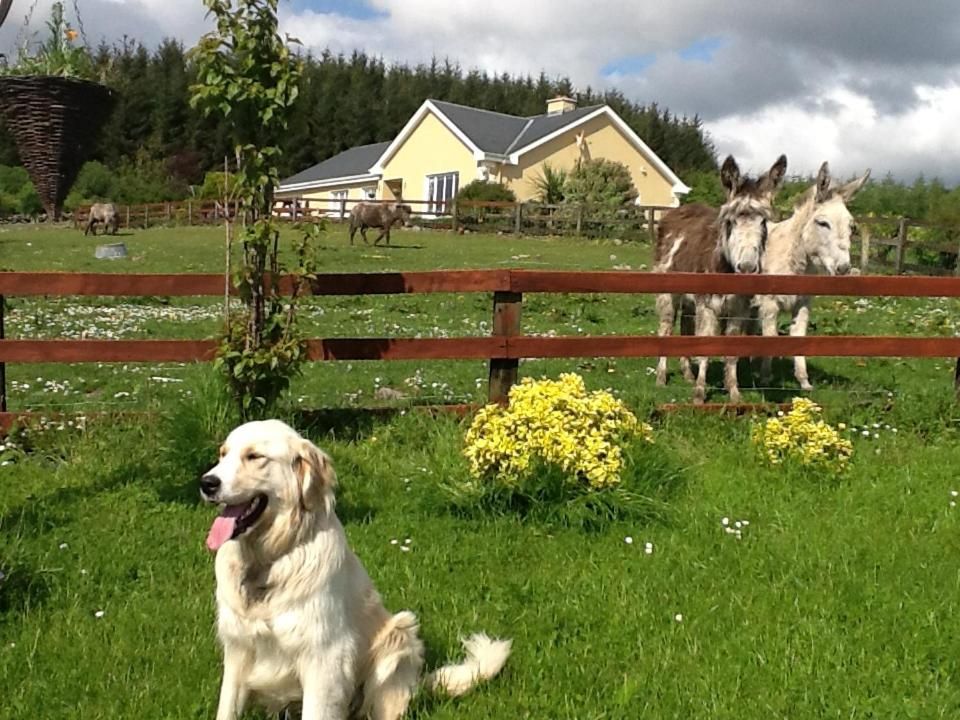 Pet or pets staying with guests at Hillview Farm House B&B