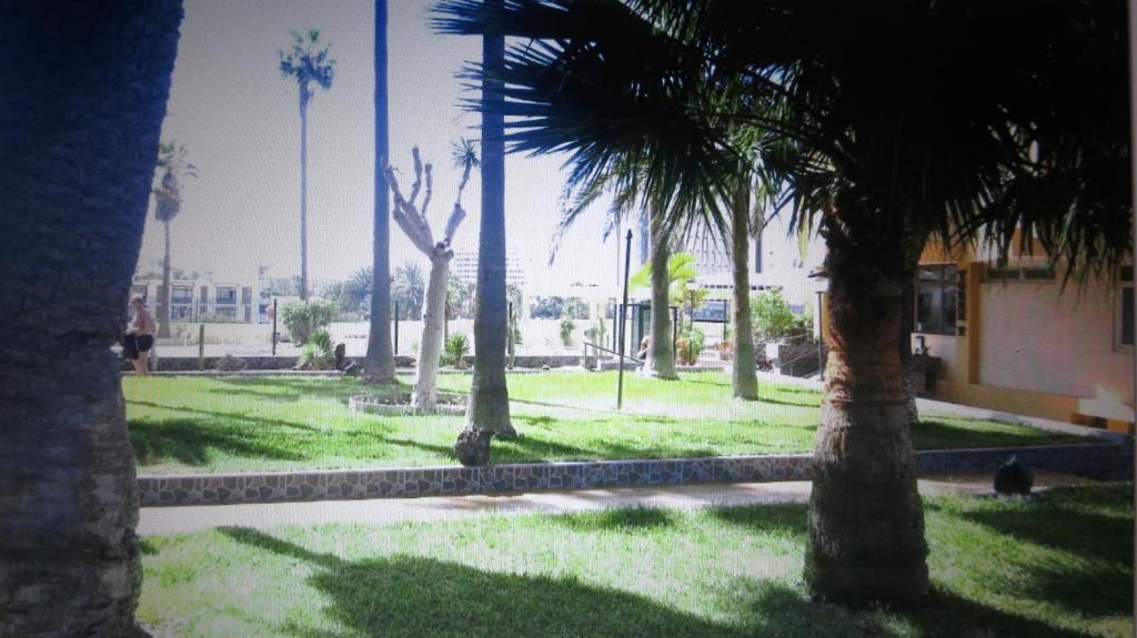 Jardín al aire libre en New apartment near the beach