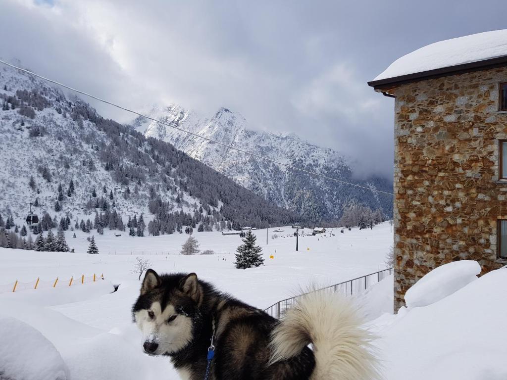 SCI AI PIEDI,PASSEGGIATE,MOUNTAIN BIKE,RELAX during the winter