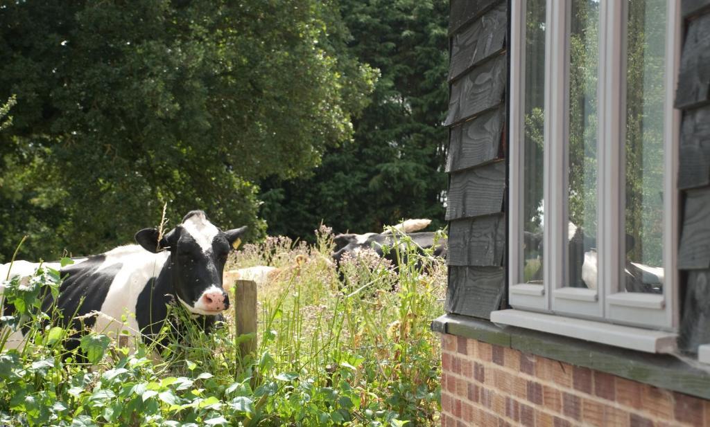 Bull Farm Studios - Laterooms