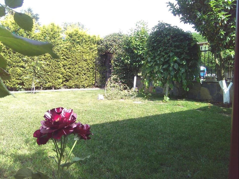 A garden outside 174893/1 - Atta Villa