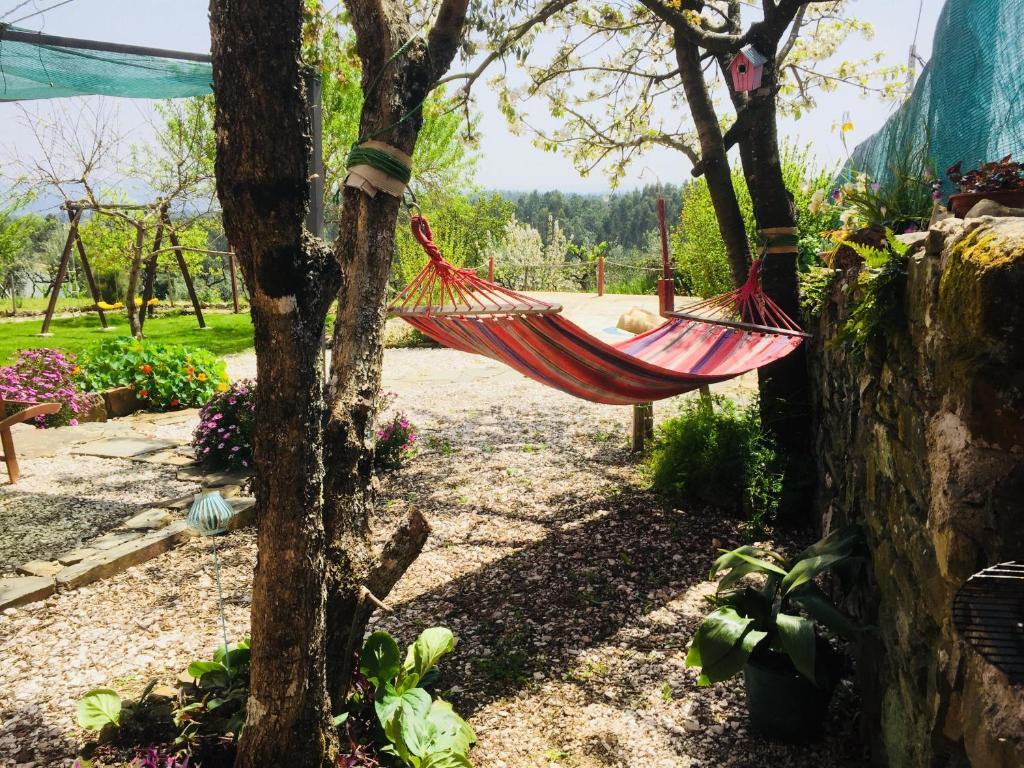 A garden outside Casa do Ti Jacinto