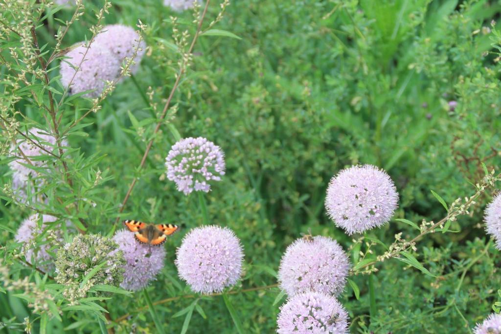 Сад в 1 Gostiniy Dvor Izbushka