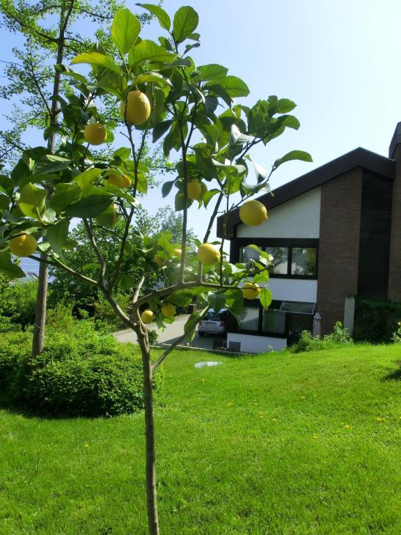 Ein Garten an der Unterkunft Ferienwohnung Thea