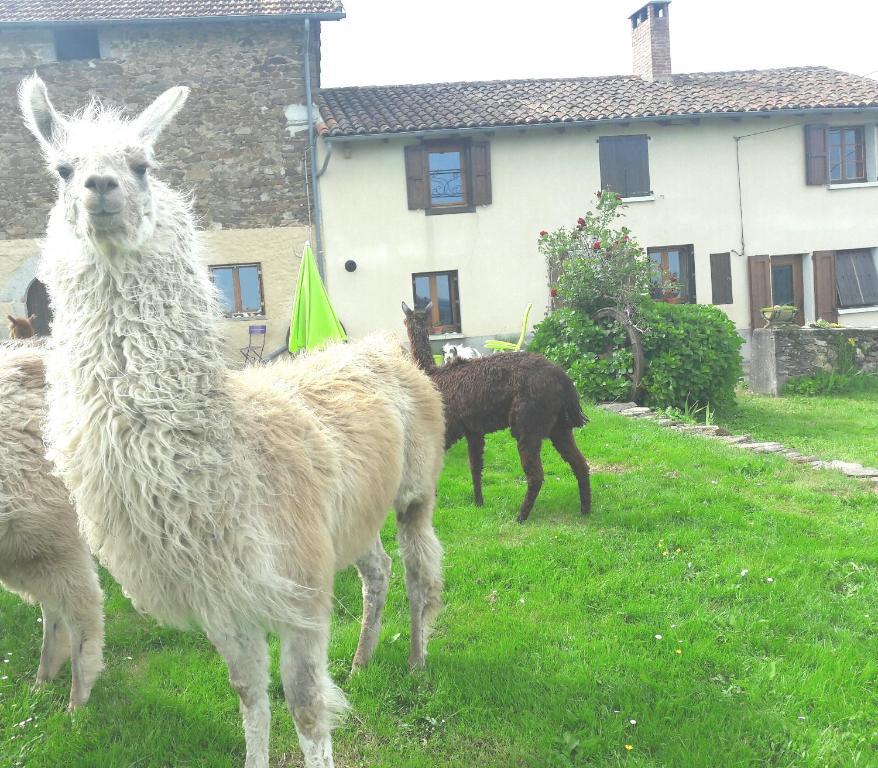 Ferme Animalière Lamalpapoche Le hameau des animaux