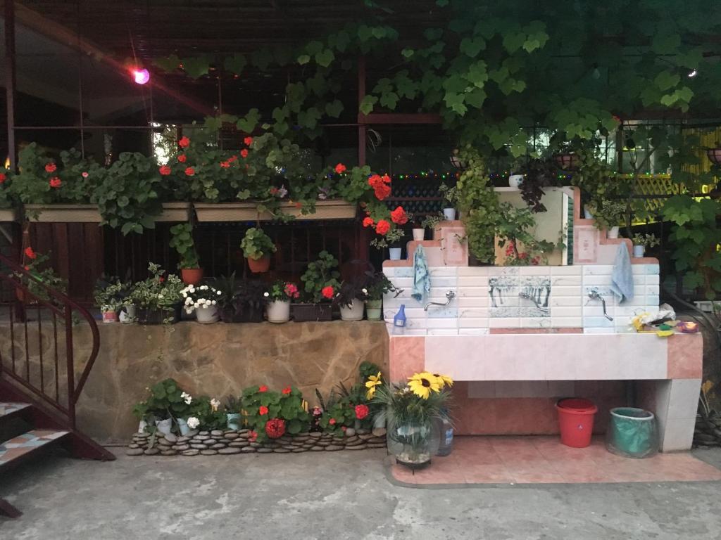Ресторан / где поесть в Guest House Kristina