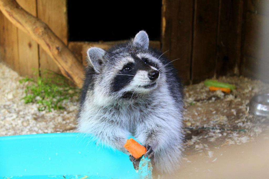 Животные в гостевом доме или окрестностях