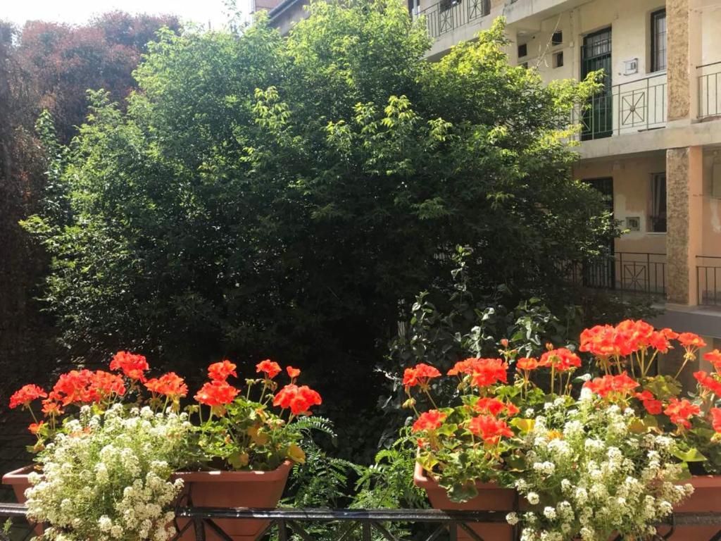 Κήπος έξω από το Sunny Studio Flat