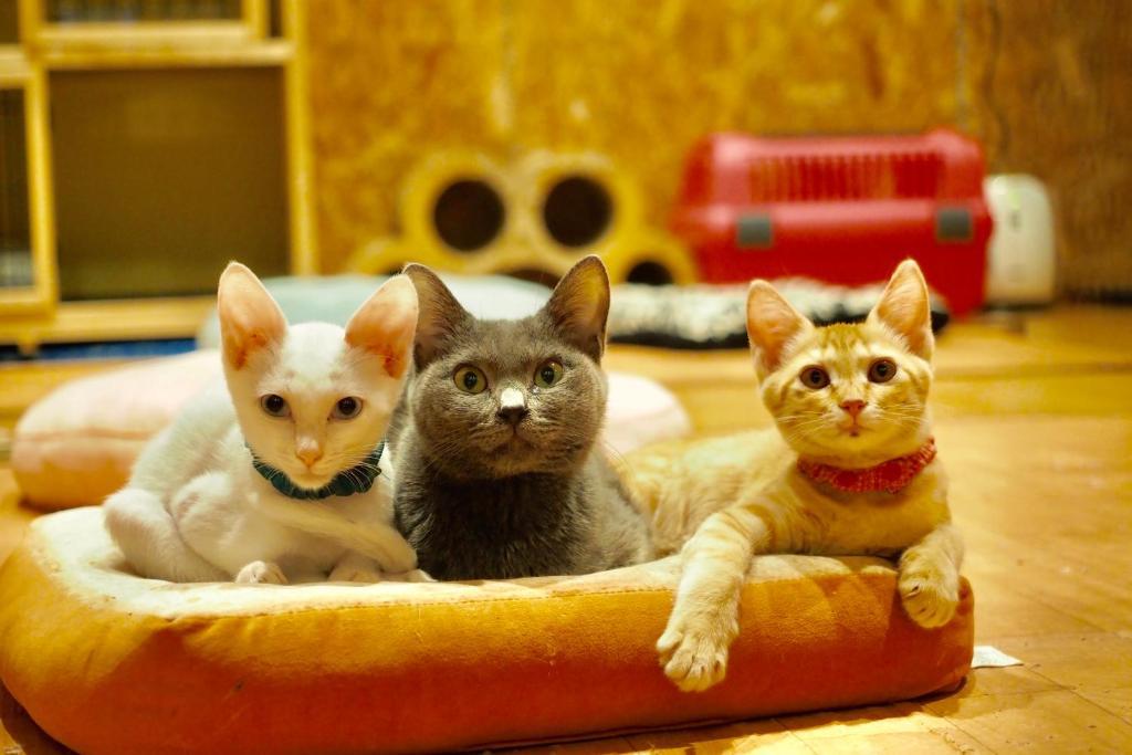 宿泊客と一緒にNekokura Hostelに滞在中のペット