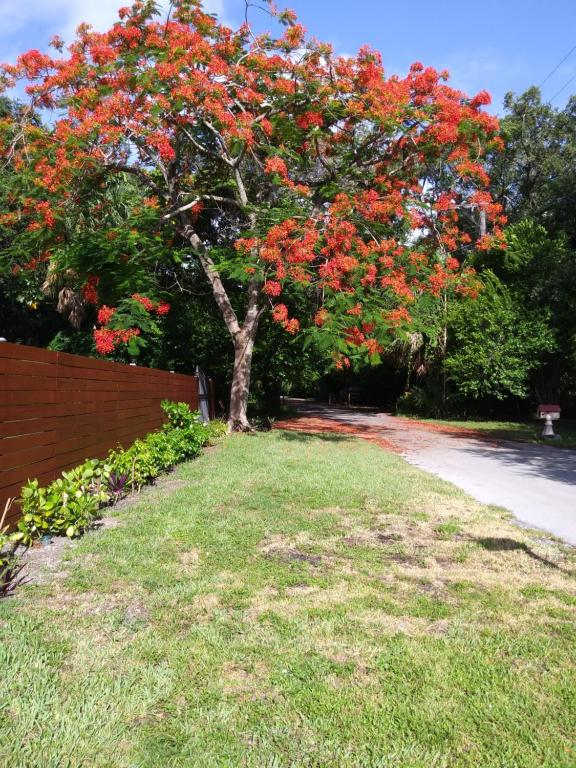 A garden outside pinacolada oasis, studio plus gazebo