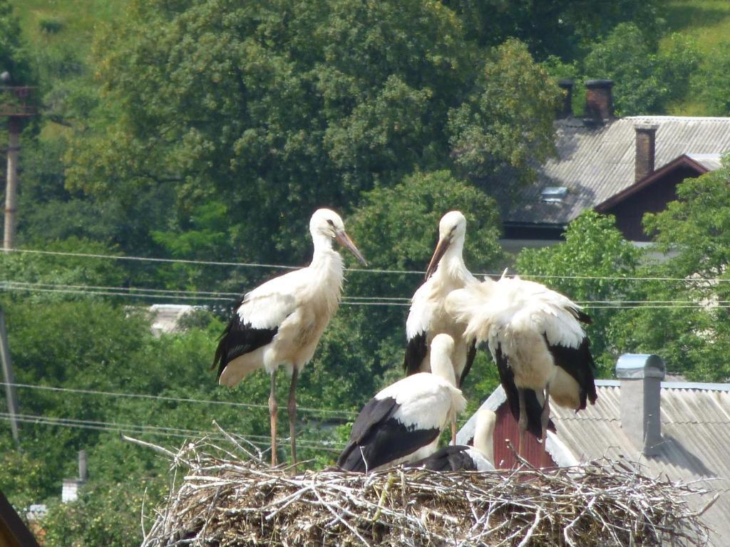 Животные in country house или окрестностях