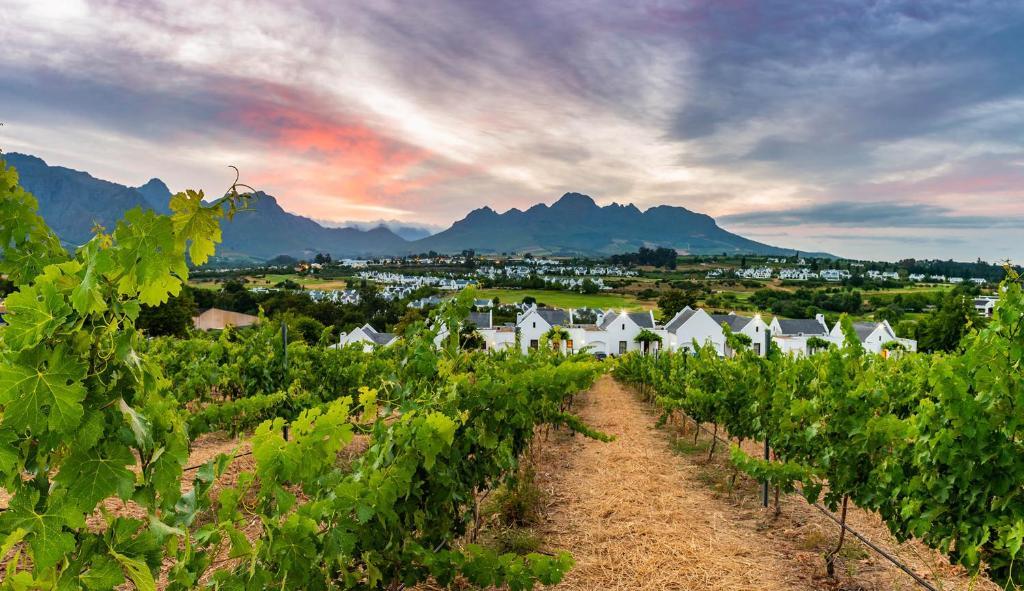 De Zalze Lodge i Stellenbosch – uppdaterade priser för 2020