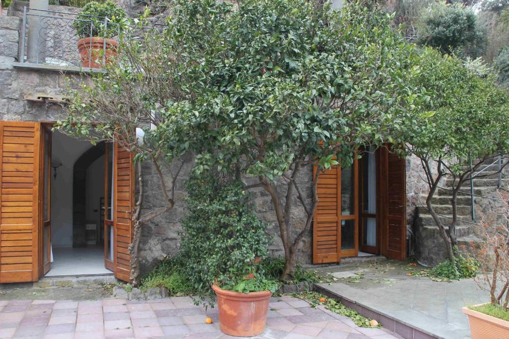 Villa Polito (Italia Ischia)   Booking.com