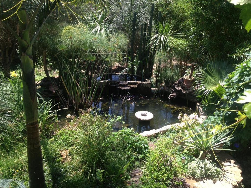 En hage utenfor Hotel Molino Garden