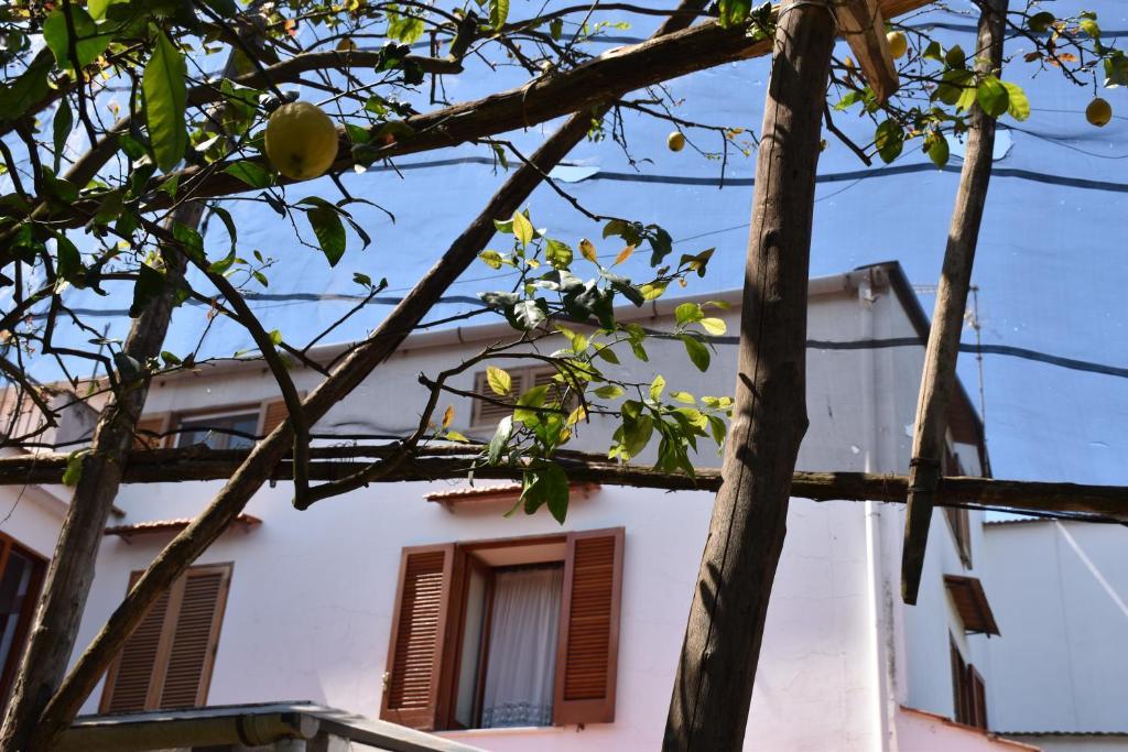 Villa Carmela Italia Piano Di Sorrento Booking Com