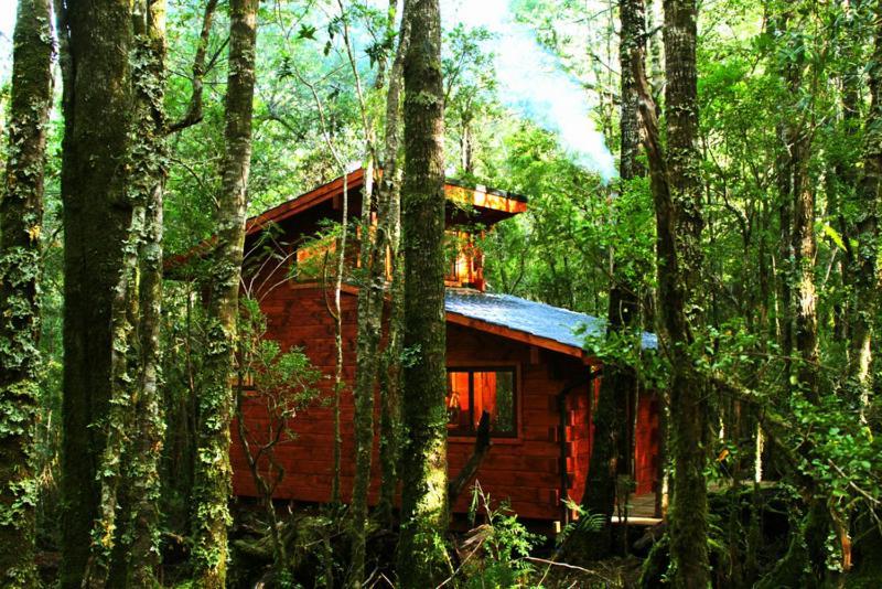 Cabañas Bosque Milenario