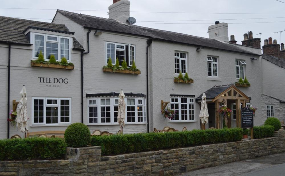 The Dog in Over Peover