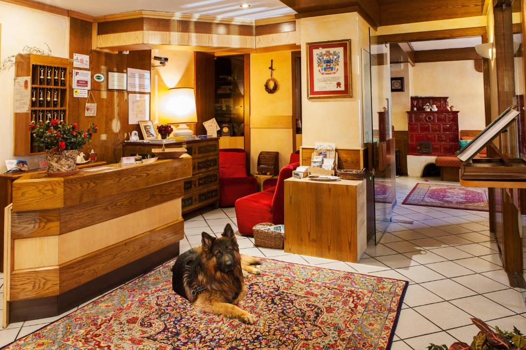 Pet or pets staying with guests at Hotel Wanda