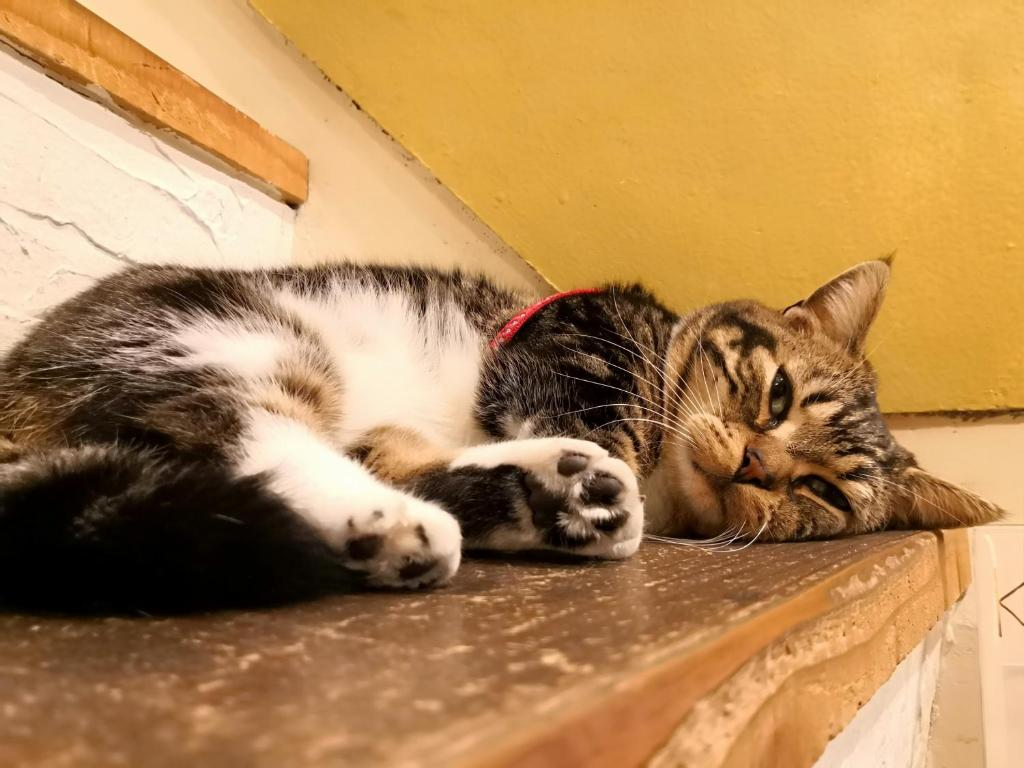 Pet or pets staying with guests at Tani9 Backpackers Osaka