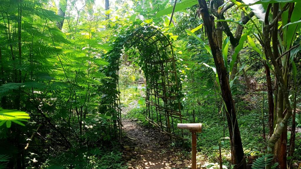 Indonesia Jungle