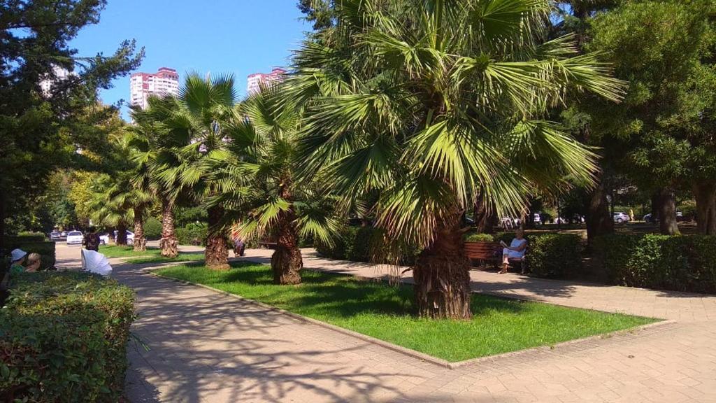 Сад в Apartment on Krasnoarmeyskaya