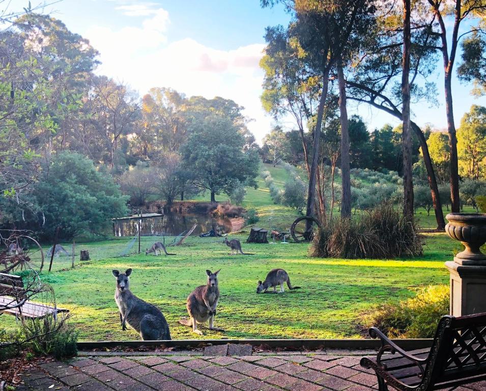 Countryside Retreat Spa Cottage Hepburn - Daylesford