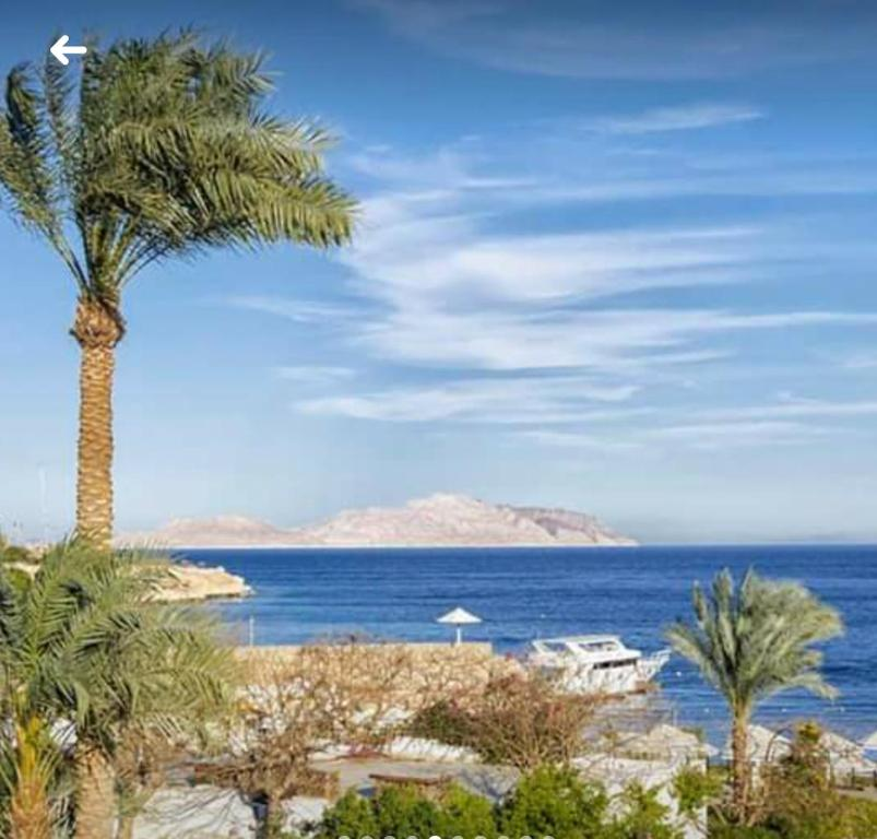 Apartment At Domina Coral Bay Resort Sharm El Sheikh Updated 2021 Prices