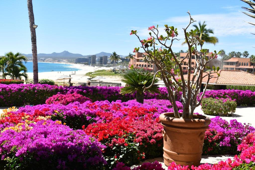 El Dorado Iii Cabo San Lucas Updated 2021 Prices