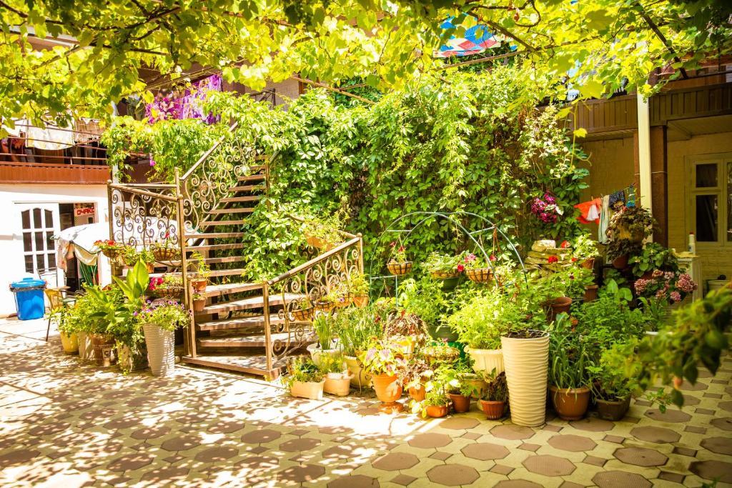 A garden outside Alenka