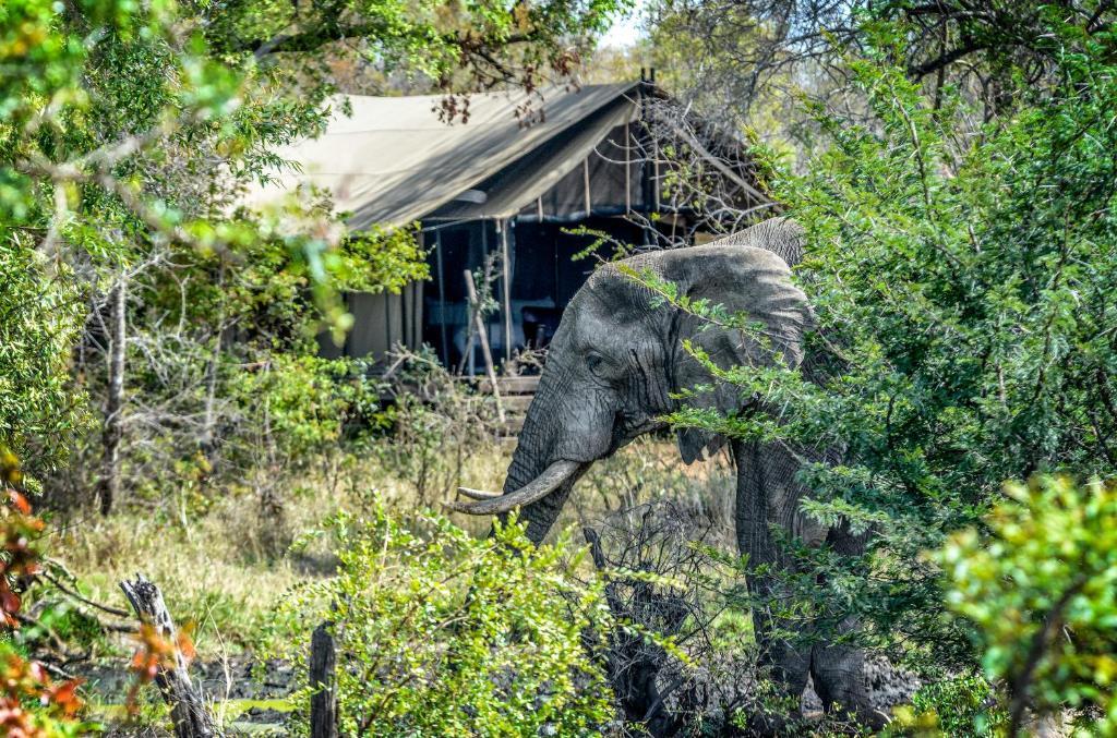 גינה חיצונית ב-Honeyguide Tented Safari Camp - Khoka Moya