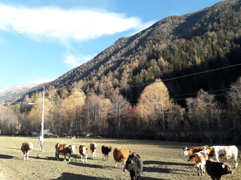 Urlaub auf dem Bauernhof Freiheit und Natur Pur