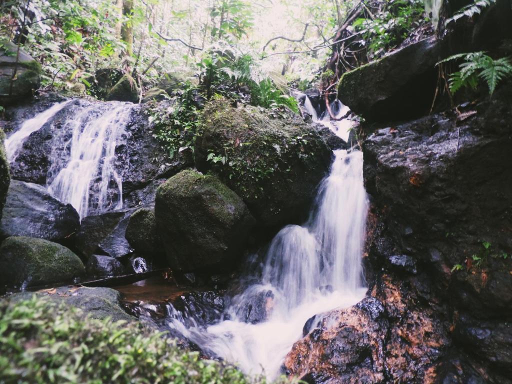 Aprendiendo a vivir Río Celeste