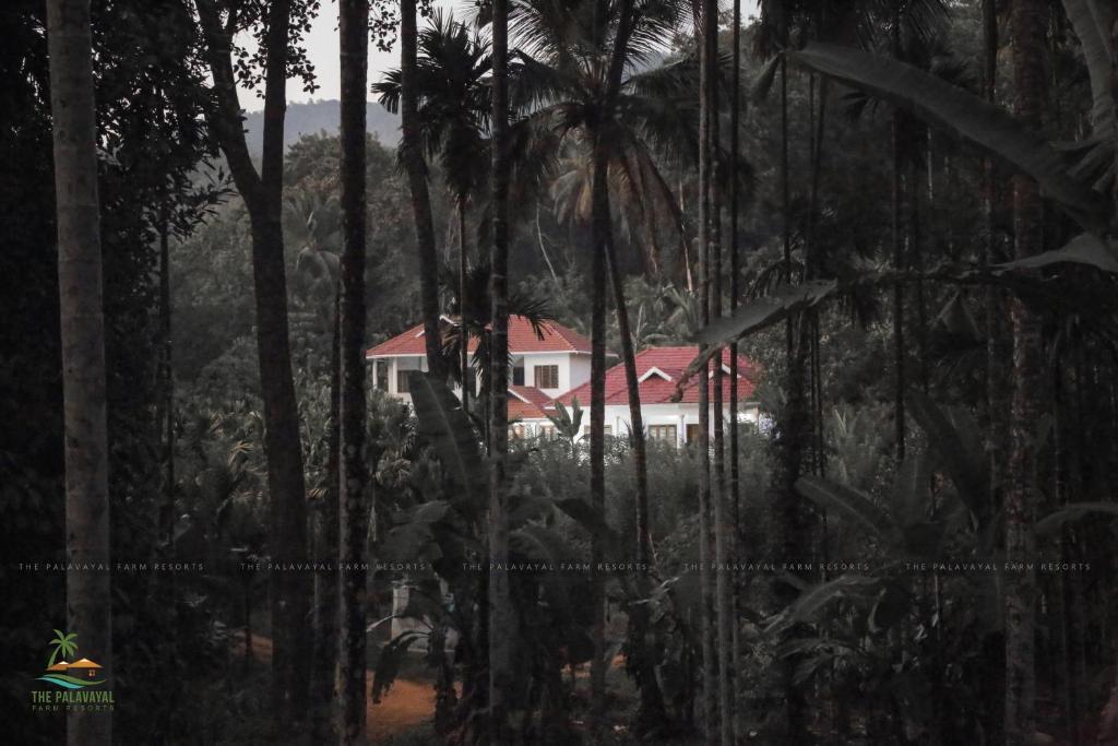 The Palavayal Farm Villa