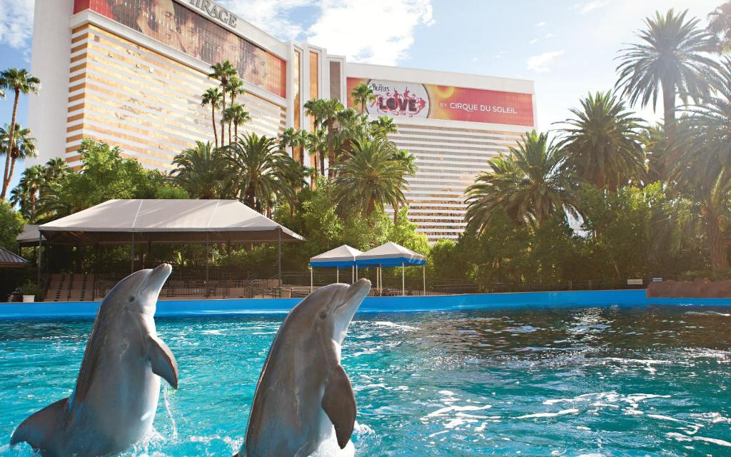 Dolphins swimming at the Mirage Hotel in Las Vegas.