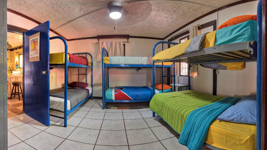 A bunk bed or bunk beds in a room at Ensenada Backpackers