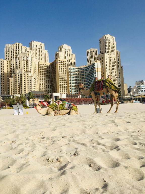 Дубай апартаменты с пляжем недвижимость в бремене германия