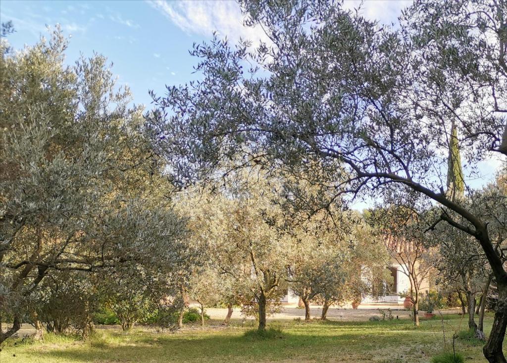 Jardin de l'établissement Mas des Oursons - Chambres d'hôtes