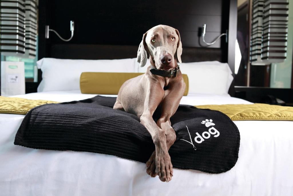 Pet or pets staying with guests at Vdara Hotel & Spa at ARIA Las Vegas