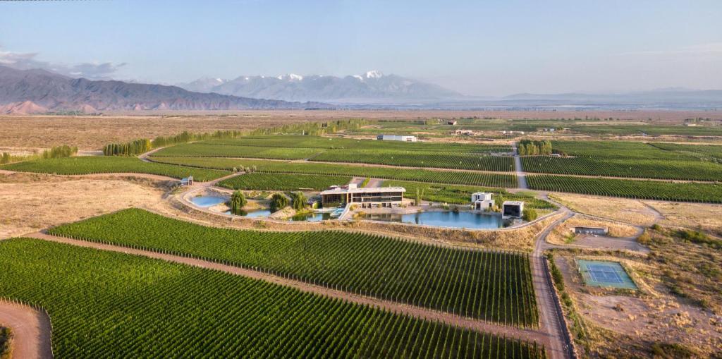 A bird's-eye view of Casa de Uco Vineyards and Wine Resort