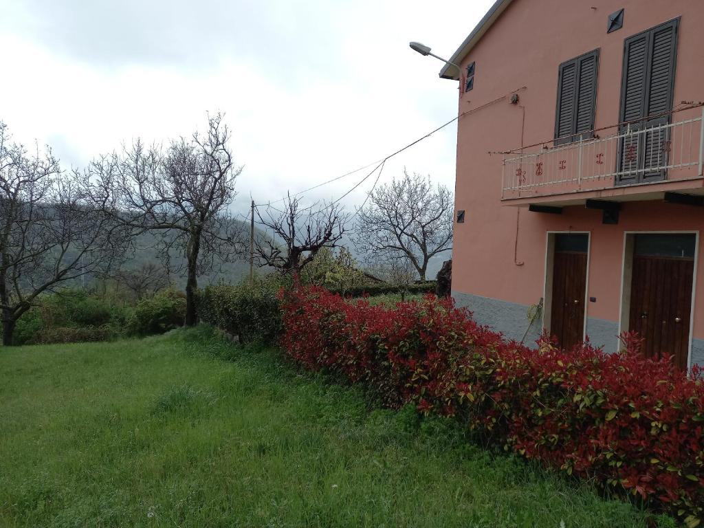 Raudonas vynas: CANTINA TOLLO Valle d'Oro Trebbiano d'Abruzzo,sausas