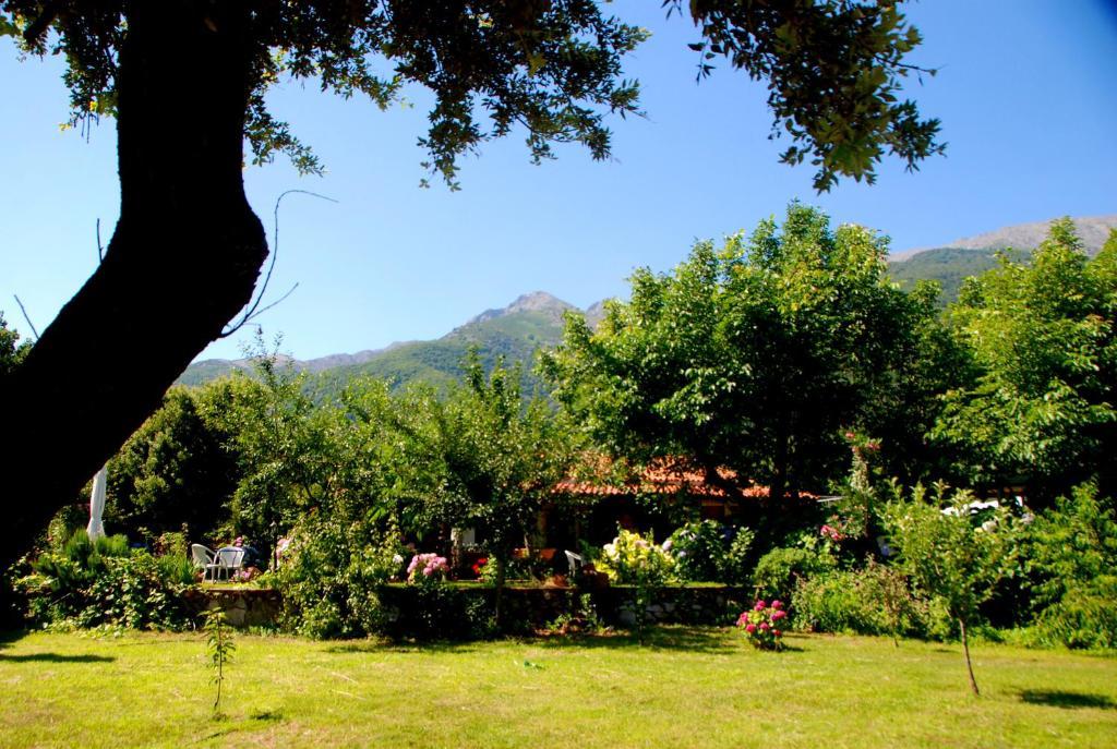 A garden outside Alekas Studios