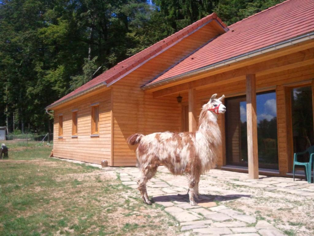Pet or pets staying with guests at Vosges Chambres d'hotes