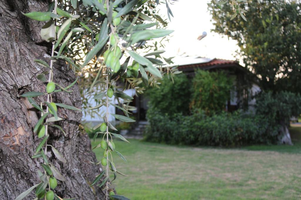 Κήπος έξω από το Patroudis House
