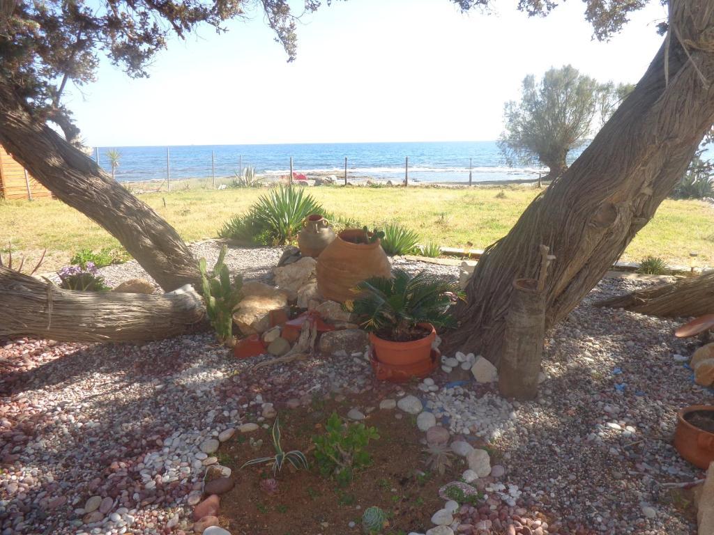 Κήπος έξω από το Nicholas Beach Studios