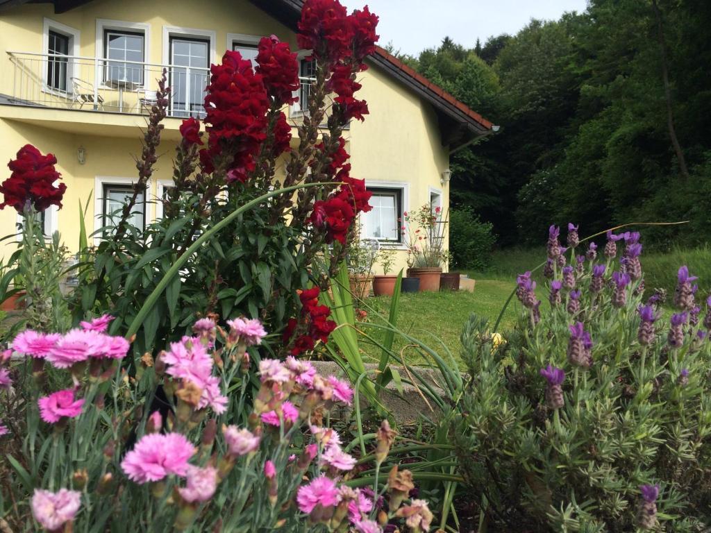 Ein Garten an der Unterkunft Das gelbe Haus