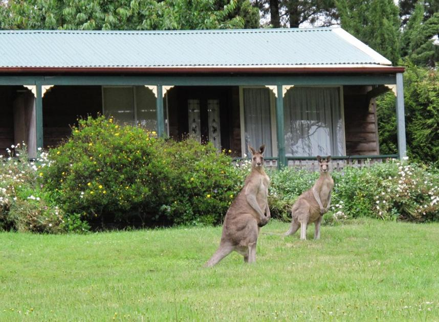 Pet or pets staying with guests at Cedar Lodge Cabins