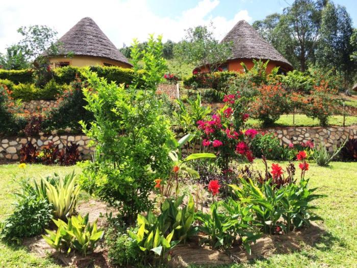 A garden outside Nyore Hillside Retreat