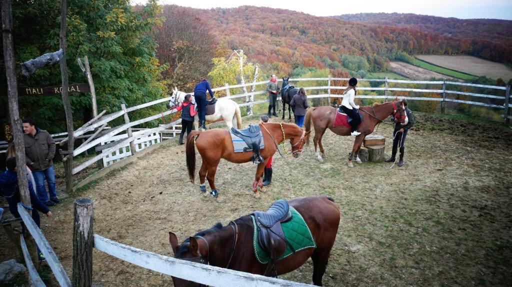 Катание на лошадях на территории of country house или поблизости