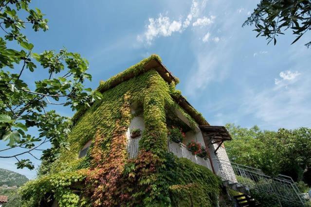 Casale Bambù